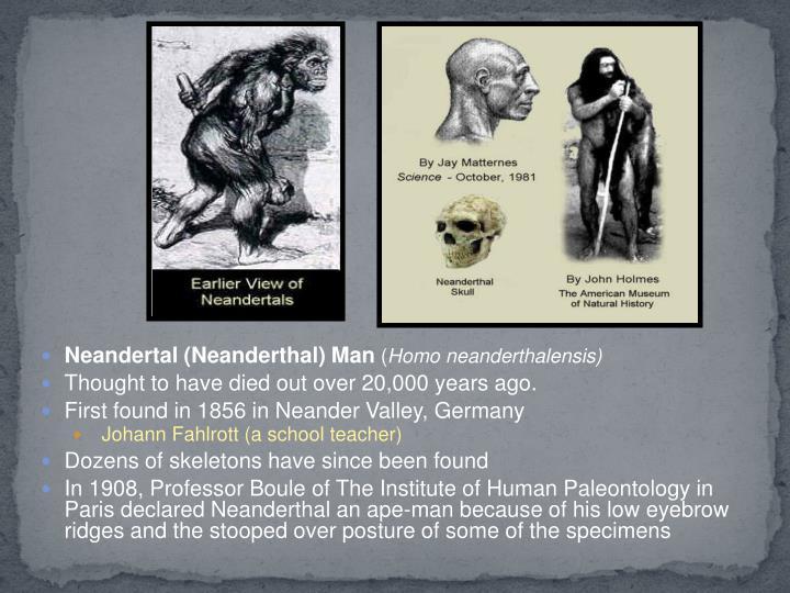 Neandertal (Neanderthal) Man