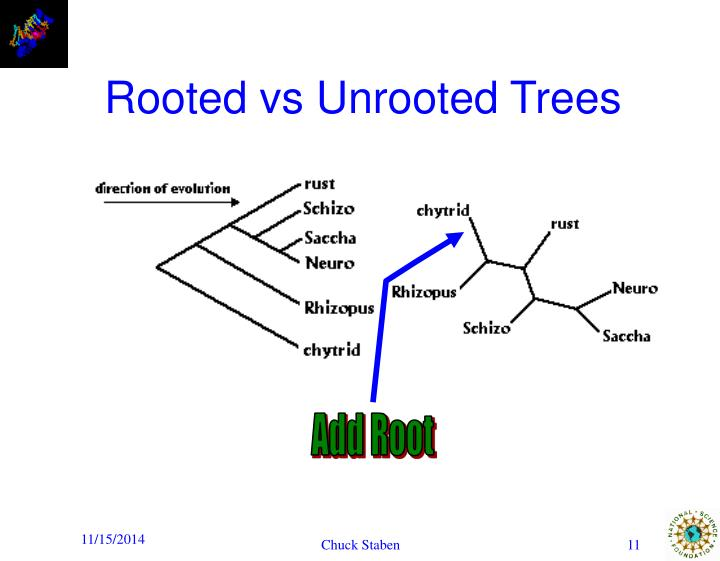 Add Root