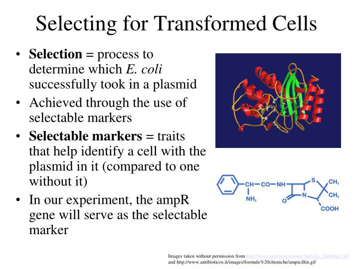 Selecting for Transformed Cells