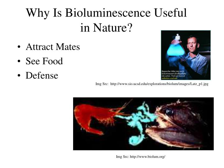 Why Is Bioluminescence Useful in Nature?