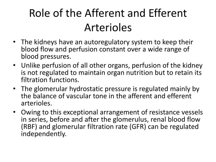 Ppt The Physiology Of The Afferent And Efferent Arterioles