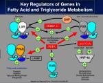key regulators of genes in fatty acid and triglyceride metabolism