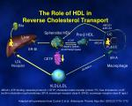 the role of hdl in reverse cholesterol transport