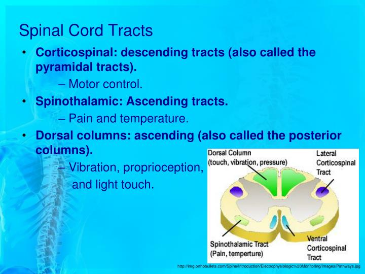 an analysis and an introduction to spinal cord injuries