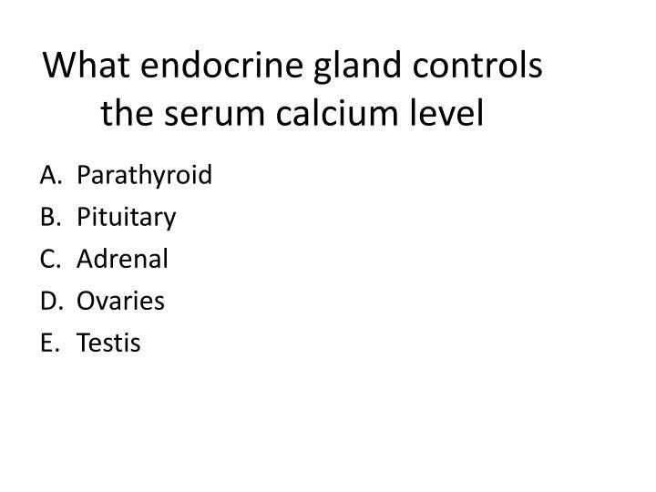 What endocrine gland controls the serum calcium level
