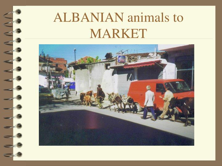 ALBANIAN animals to MARKET