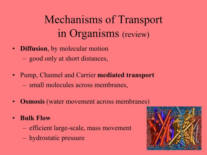 Mechanisms of transport in organisms review