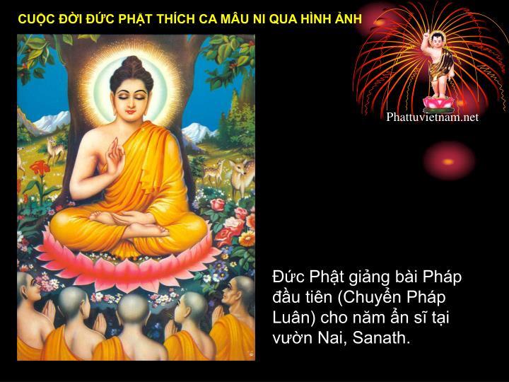 Đức Phật giảng bài Pháp đầu tiên (Chuyển Pháp Luân) cho năm ẩn sĩ tại vườn Nai, Sanath.
