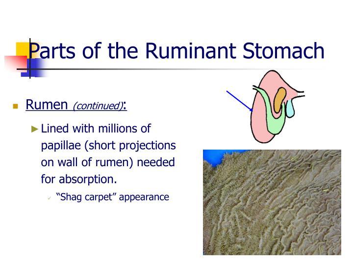 Ppt Animal Digestion Powerpoint Presentation Id6644821