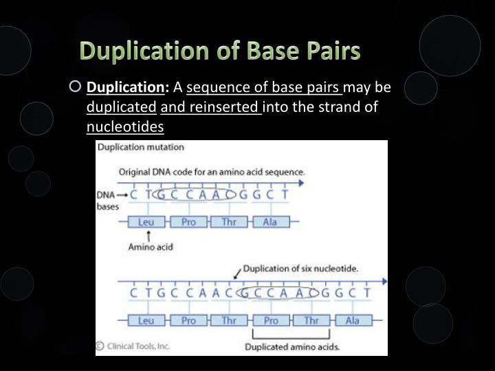 Duplication of Base Pairs