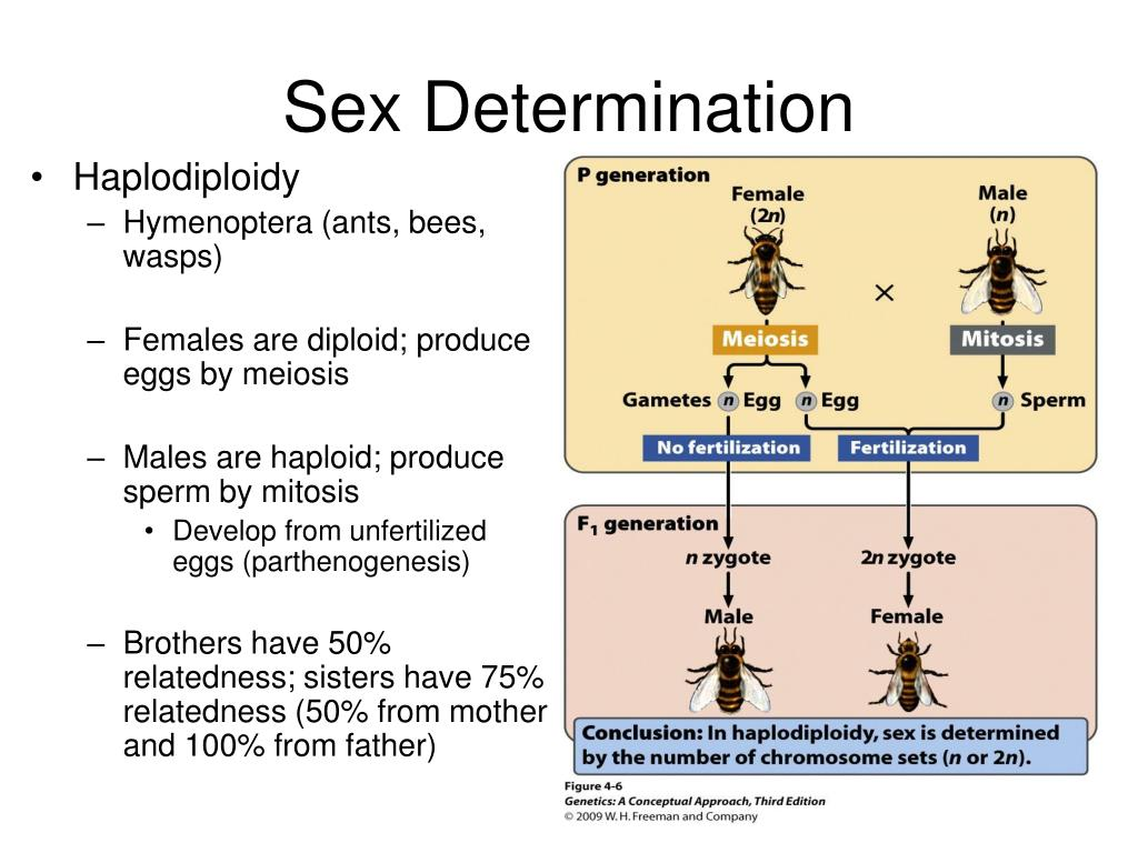sex chromosomes and sex determination in reptiles amphibians in Shreveport