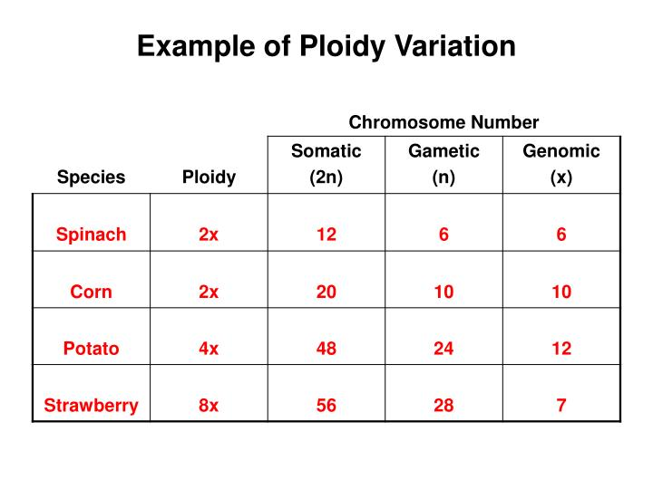 Example of Ploidy Variation
