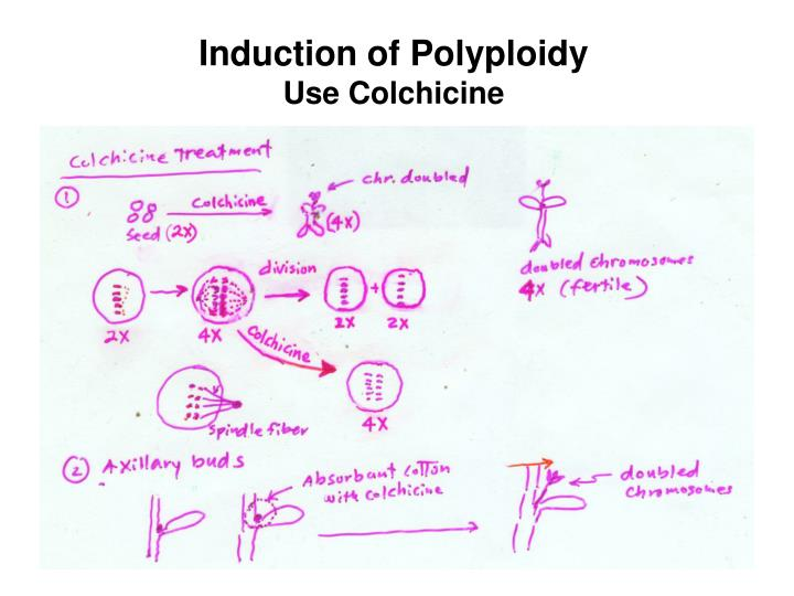 Induction of Polyploidy