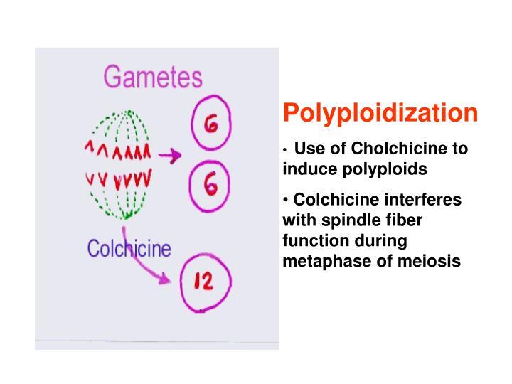 Polyploidization