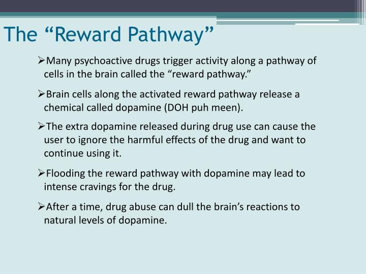 """The """"Reward Pathway"""""""