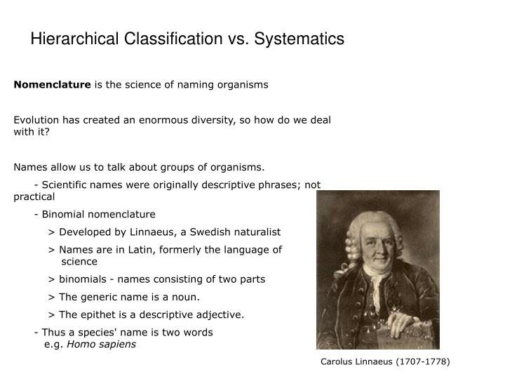 Hierarchical Classification vs. Systematics