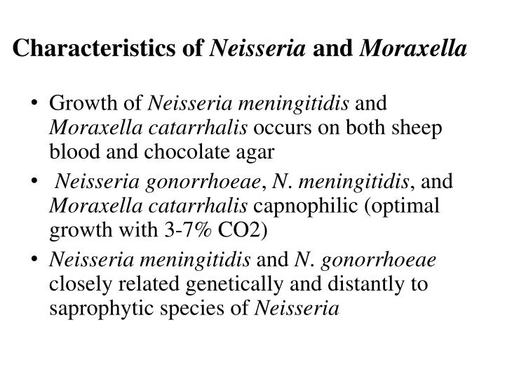 identification of neisseria and moraxella species