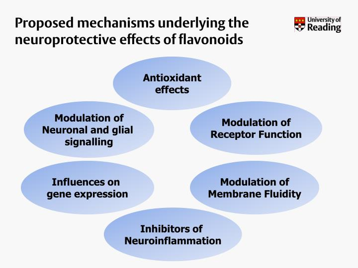 Proposed mechanisms underlying the neuroprotective effects of flavonoids