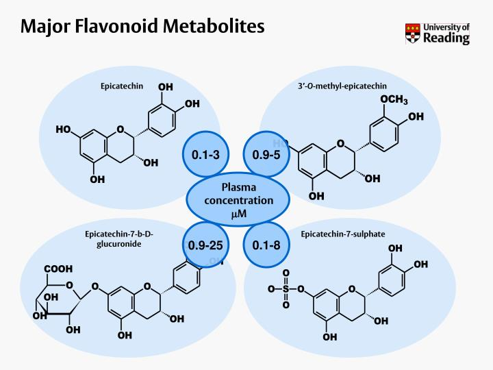 Major Flavonoid Metabolites