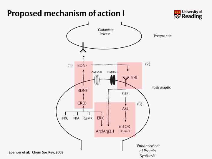 Proposed mechanism of action I