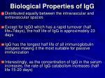 biological properties of igg