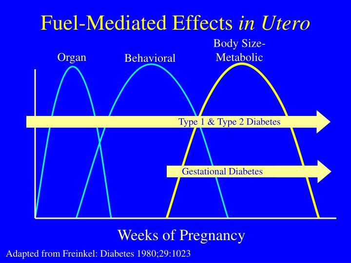 Type 1 & Type 2 Diabetes