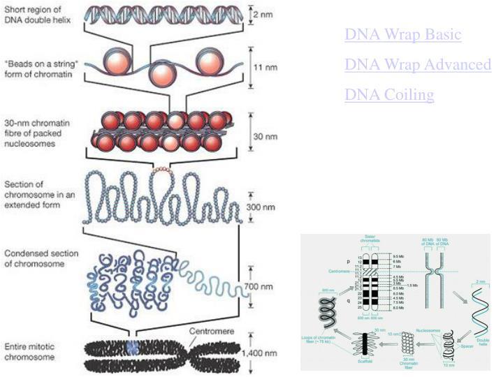 DNA Wrap Basic
