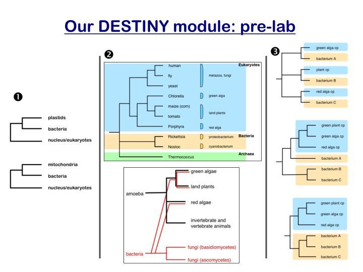 Our DESTINY module: pre-lab