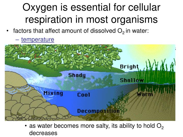 affects the amount of oxygen created The amount of oxygen that can be held by the water depends on the water temperature, salinity, and pressure gas solubility increases with decreasing temperature (colder water holds more oxygen) gas solubility increases with decreasing temperature (colder water holds more oxygen.