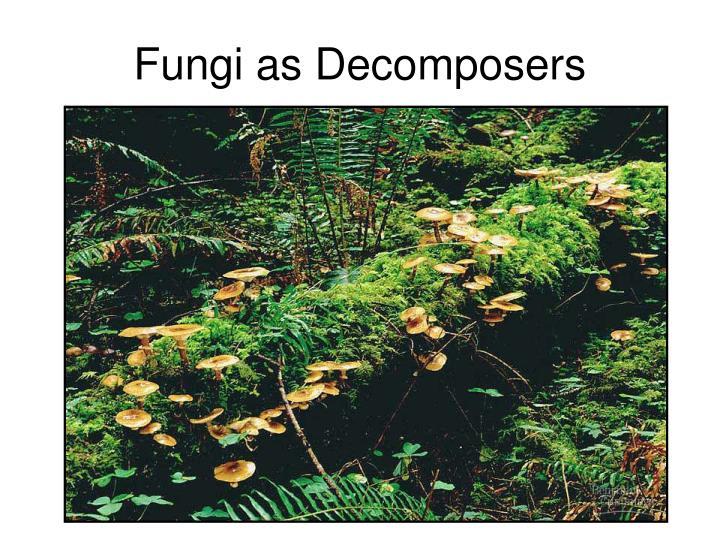 Fungi as Decomposers