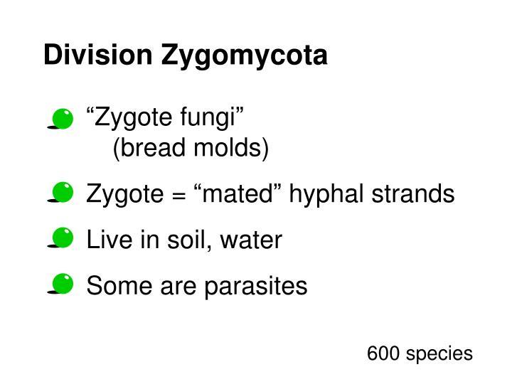Division Zygomycota