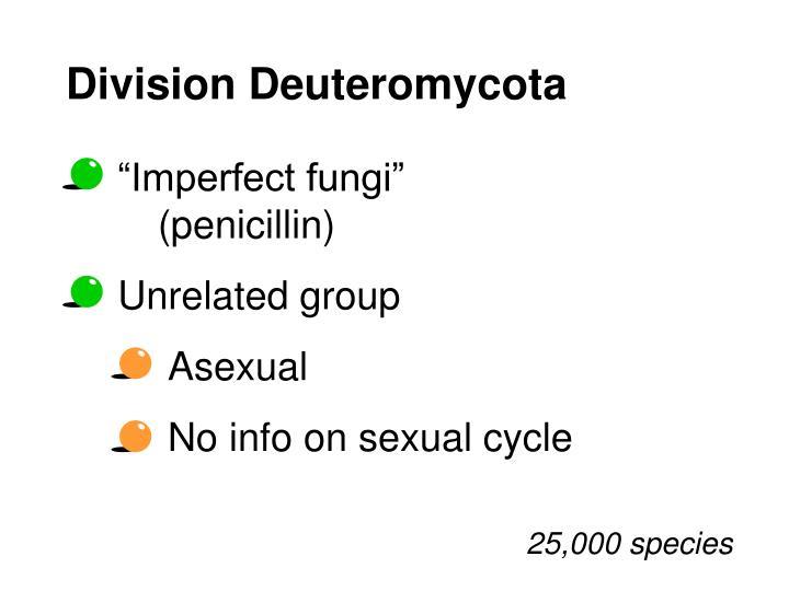 Division Deuteromycota