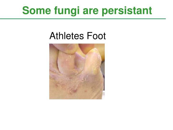 Some fungi are persistant
