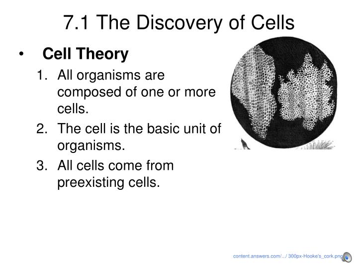 2 page essay on why the cell is the basic unit of life Of performing all the activities of life the first cells were observed and named by 2 the cell thoery a panoramic view of the cell basic features of cells:.