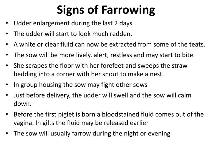 Signs of Farrowing