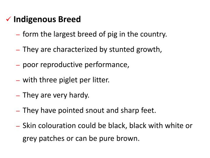 Indigenous Breed