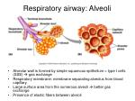respiratory airway alveoli