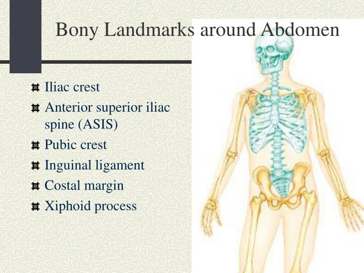 what are actually this bony landmarks of all the abdominopelvic cavity