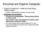 enzymes are organic catalysts