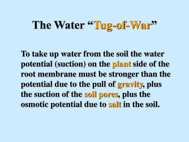 The water tug of war