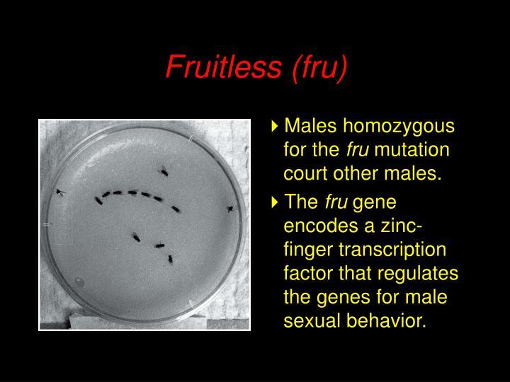 Fruitless (fru)