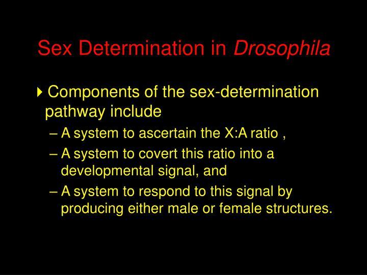 Sex Determination in