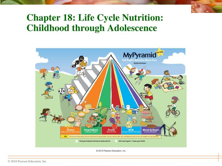 chapter 18 life cycle nutrition childhood through adolescence n.