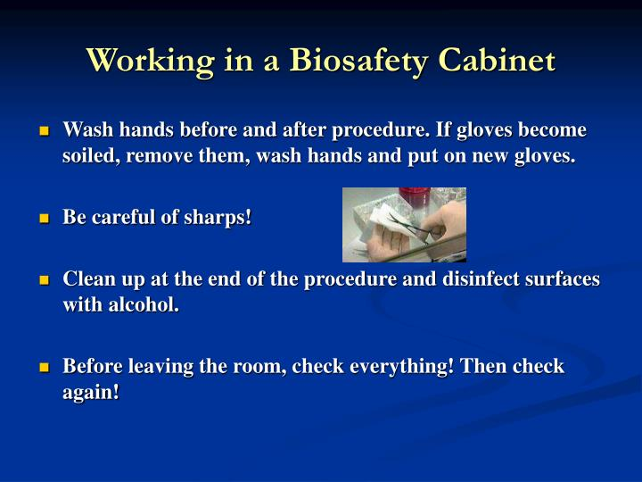 Working in a Biosafety Cabinet