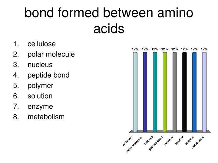 bond formed between amino acids