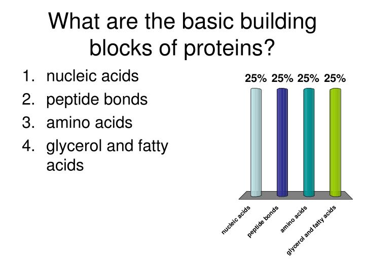 What are the basic building blocks of proteins?