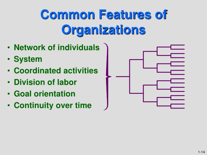 Common Features of Organizations