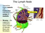 the lymph node