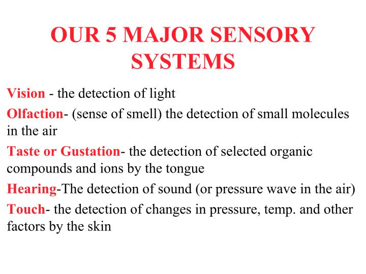 our 5 major sensory systems n.