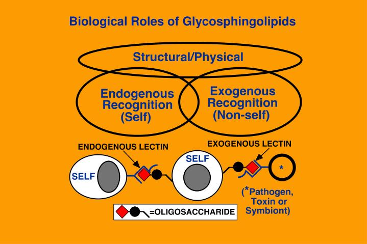 Biological Roles of Glycosphingolipids